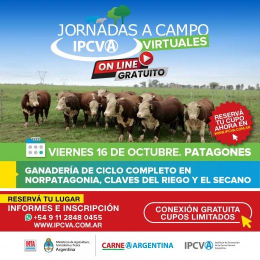 EN DIRECTO - Jornada a campo virtual del IPCVA en Patagones, Pr...